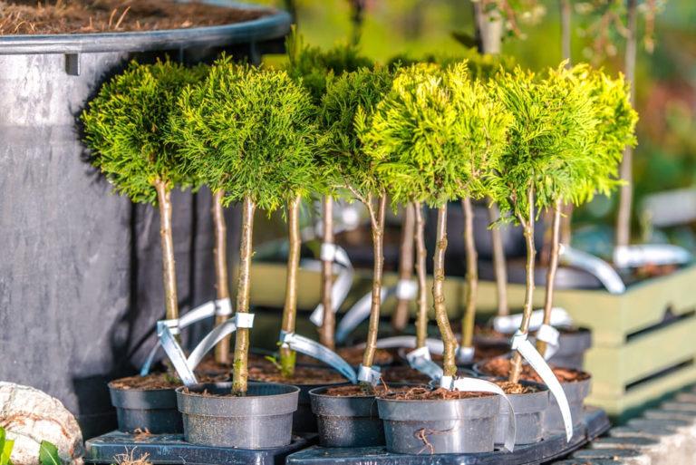 ТУ БИШВАТ — Новый год деревьев