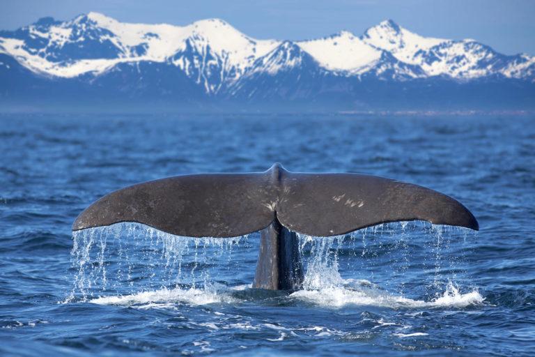 3 кита, на которых стоит грамматика иврита